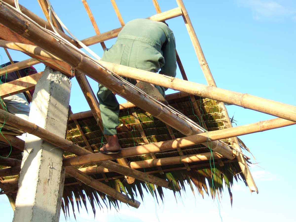 Nipa thatch being laid. It is tied on to the roof structure with thin nylon rope.