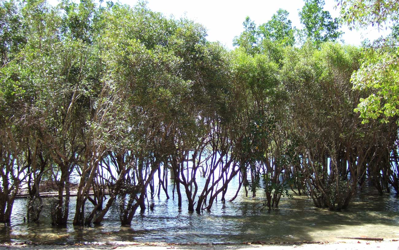 As the trail neared the resort at the end of the hike we saw thriving mangroves.