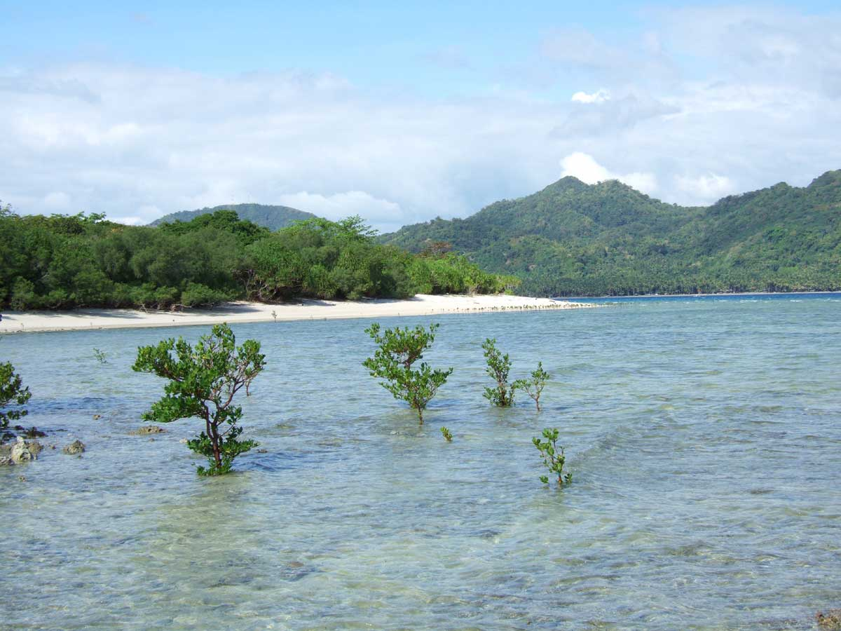 Mangroves Taking Root on Nogas Island Beach, Antique Province, Philippines