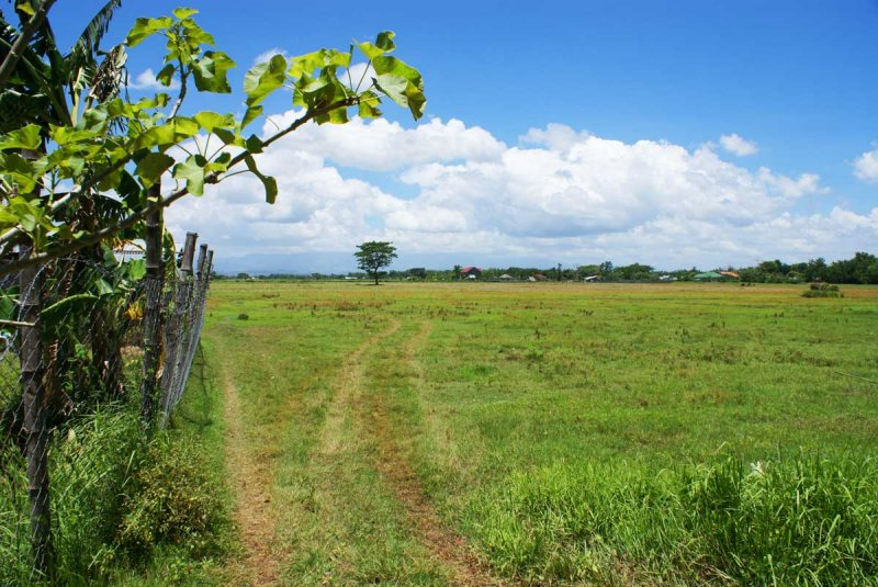 Pavia Iloilo: 3463 square meters of titled mountain view land for sale Iloilo City, Philippines  View of adjoining property reportedly purchased by Ayala Land for future development.