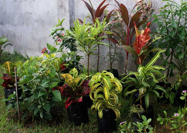 garden plants in the philippines pdf