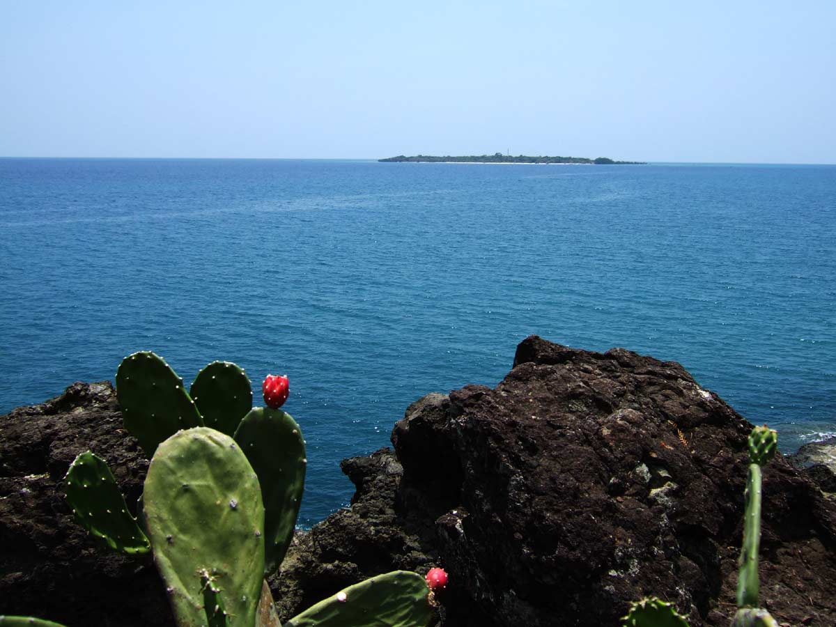 A last glimpse of Nogas Island showing Sira-an cactus