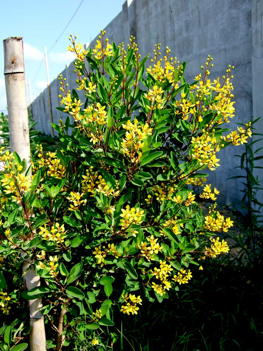 Can you identify this beautiful shrub?