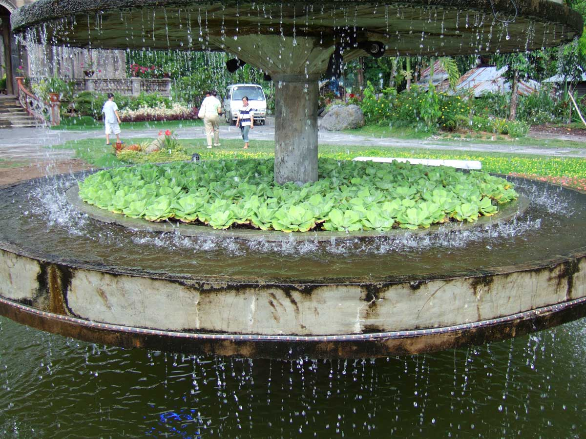 Water Lettuce (Pistia stratiotes) The Ruins, Talisay, Bacolod, Philippines